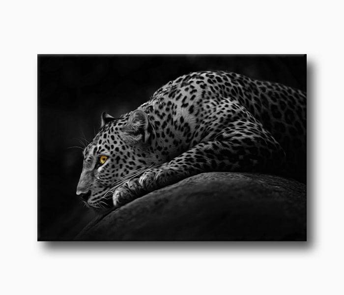 leopar Hayvan Fotoğraf, pusudaki leopar