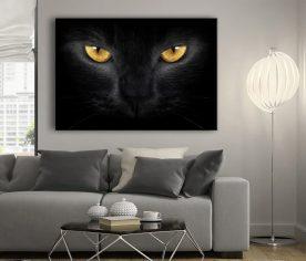 kara kedi fotoğrafları