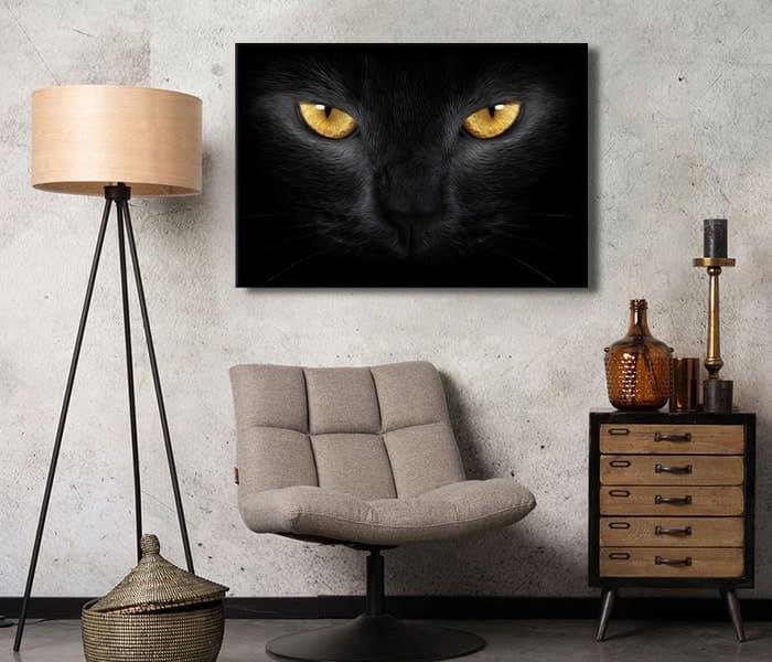 kara kedi görünce ne yapmalı