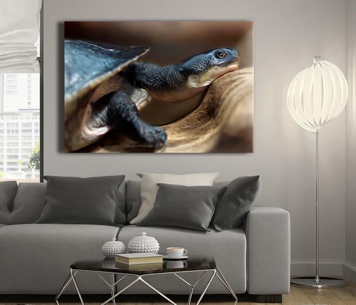 feng shui kaplumbağa