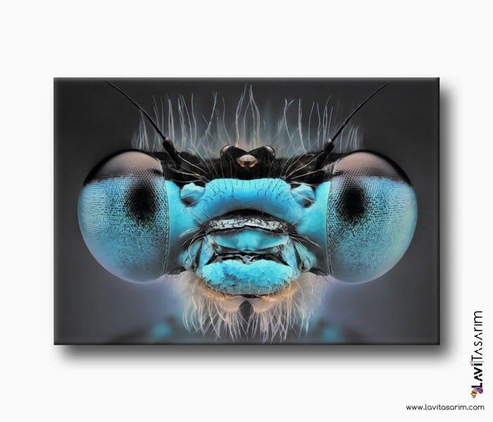 yakın çekim böcek, lavi tasarım